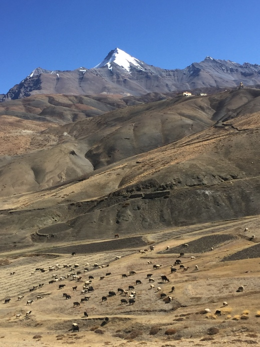 Grazing animals against the amazing landscape