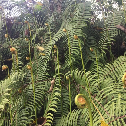 Gigantic ferns